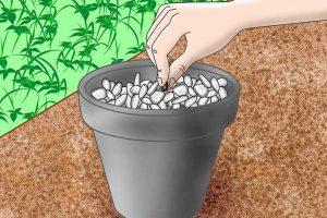 چگونه یک باغ هیدروپونیک خانگی راه اندازی کنیم؟