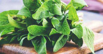 مریم گلی؛ بهترین گیاهان دارویی درمان دیابت