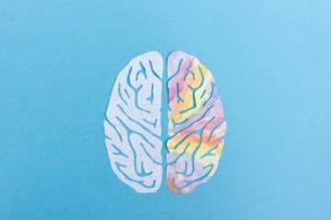 نیم کره چپ و راست مغز