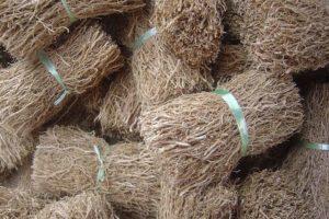 خواص روغن ریشه گیاه وتیور