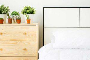 10 گیاه آپارتمانی تصفیه کننده هوا