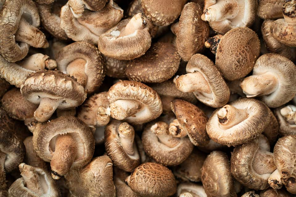 خوراکی های آب رسان بدن و پوست,قارچ