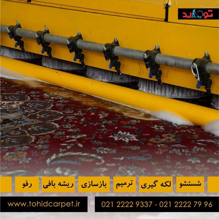 راهنمای کپک و پوسیدگی فرش