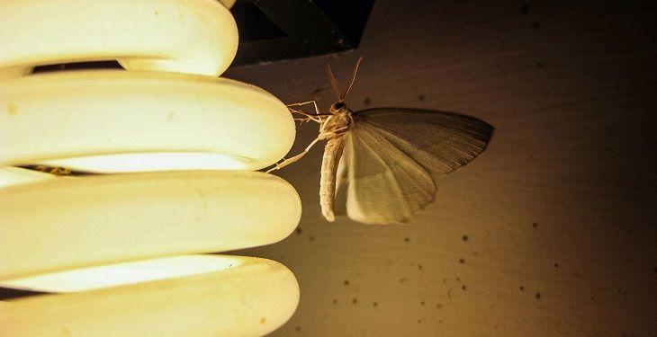 14 روش برای جلوگیری از ورود حشرات به خانه