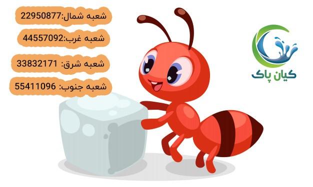 آیا مورچه ها و موریانه ها می توانند عامل بیماری باشند؟