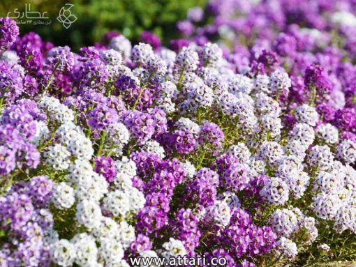 درمان انواع بیماری ها با روش های طبیعی و گیاهی
